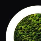 Sattler luce verde